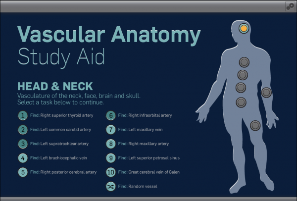 Vascular Anatomy Study Aid screenshot: home page where the user can select a level and a studying task