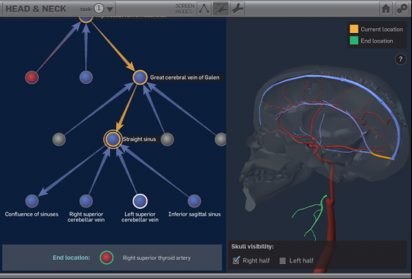 Vascular Anatomy Study Aid screenshot: user attempts to complete a vascular sequencing task by comparing a branching node network of vasculature to a 3D model of vasculature