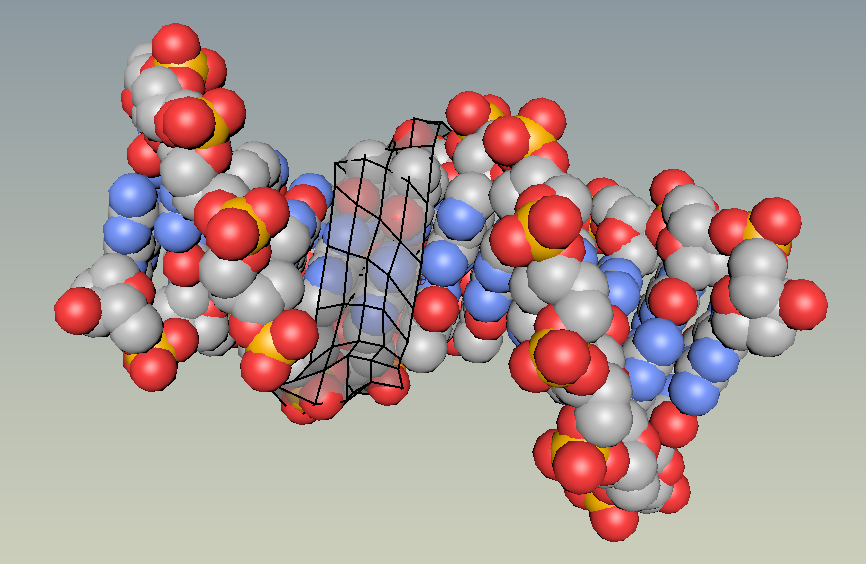 DNA modeling process retopologizing model on atoms